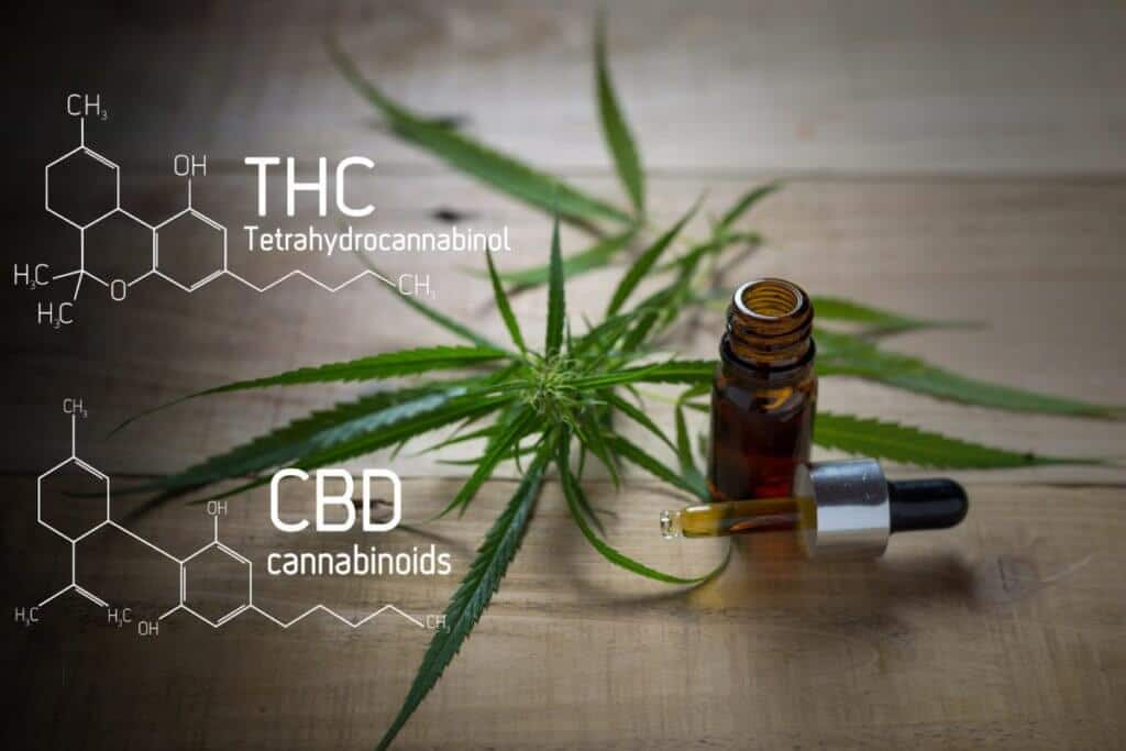 Differences between Hemp CBD Oils and THC