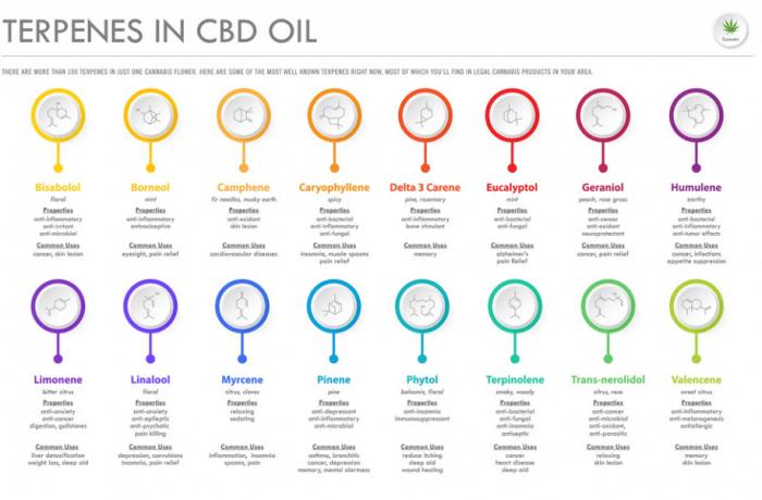 CBD Oil Terpines List