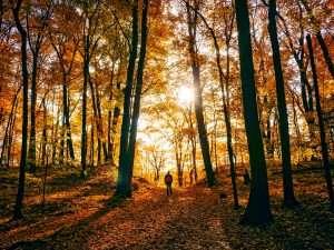 Self Care for Fall